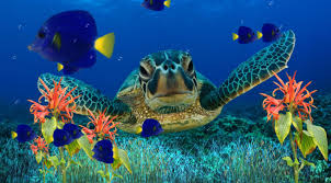 animated aquarium wallpaper for windows 7 free. Brilliant Free Intended Animated Aquarium Wallpaper For Windows 7 Free