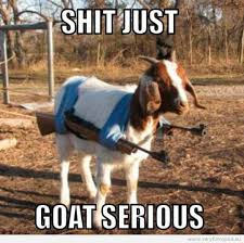 funny picture just goat serious