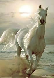 Galloping Horse Horses Horse Galloping Animals