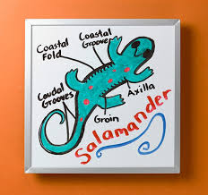 Difference Between Amphibians And Reptiles Venn Diagram Reptile And Amphibian Anatomy Crayola Com