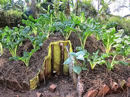 Small Picture 142 best Keyhole Gardening images on Pinterest Africans Raised