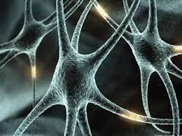 Risultati immagini per sistema immunitario impazzito