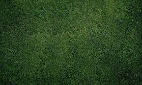 grass texture hd. Perfect Texture To Grass Texture Hd