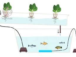 راهنمای کامل درباره سیستم آکواپونیک - پوپونیک