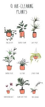 perfect office plants. 9 Best Air Cleaning Plants Perfect Office Desk Indoor