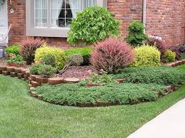 Small Picture Garden Design Garden Design with Evergreen shrub Japanese Yew
