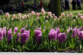 layer flower bulbs this fall for
