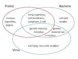 Bacteria And Viruses Venn Diagram Virus Vs Bacteria Venn Diagram General Wiring Diagram