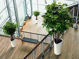 Plant Interior Design Custom Decoration