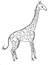 Giraffe Coloring Page Animals Town Free Giraffe Color Sheet