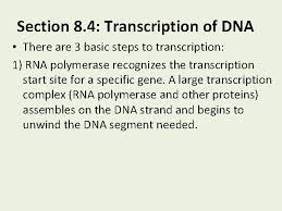 It delivers dna's instructions for making proteins. Chapter 8 From Dna To Proteins Section 8