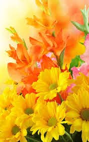 nice flowers wallpapers for mobile
