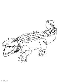 Dessin 1229 Coloriage Alligator Imprimer Oh Kids Net