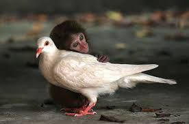 """Résultat de recherche d'images pour """"animalele au suflet"""""""