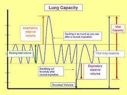 Nonrespiratory Lung Functions Boundless Anatomy And Physiology