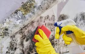 homemade mold mildew cleaners that