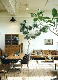 palm tree decor for living room trees in the space