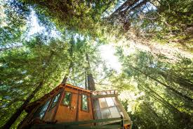 Treehouse Pictures Glamping Tree House In Santa Cruz Mountains Near Monterey Bay Ca