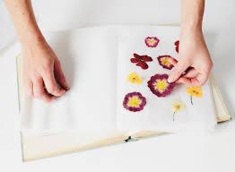 Flower Pressed Paper Diy Pressed Flowers