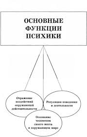 Мозг и психика Виды психических процессов Функции психики
