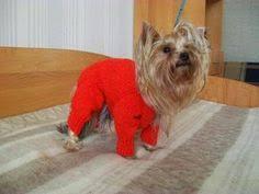 for <b>dog</b>: лучшие изображения (19) | <b>Dog</b> clothing, <b>Dog</b> sweaters и ...
