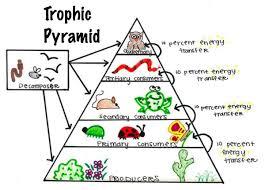 Ecosystem Pyramid Chart 75 Interpretive Ecosystem Pyramid Diagram