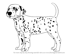 dogs drawings. Unique Drawings Learn How To Draw A Dalmatian Dog Dogs Step By  Drawing Tutorials Throughout Dogs Drawings T