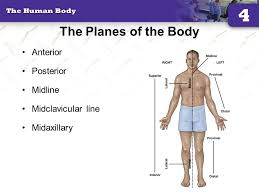 The Planes Of The Body Anterior Posterior Midline