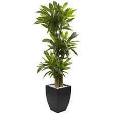 plants feng shui home layout plants. Floor Plants Feng Shui Home Layout