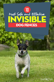 the 10 best invisible dog fences for dogs containment