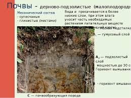 Реферат по теме Почвы России  Плодородие подзолистых почв возрастает к югу hello html 5f5294f2 jpg