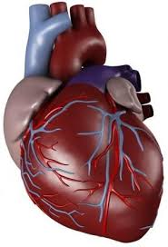 Image result for تسریح قلب ا