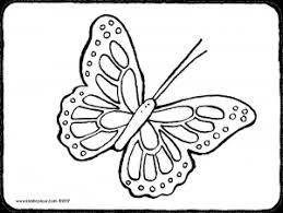 Vlinder Kiddicolour