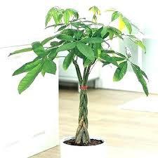 office pot plants. Office Plant Ideas Best Plants For Light Astounding Design No Pot O