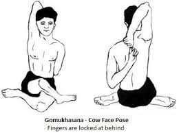 which yoga asana preventing the obesity