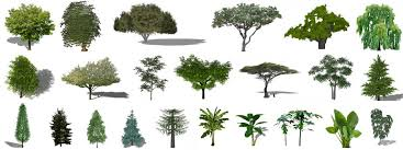 Small Picture Sketchup Plants Trees and Shrubs Archive
