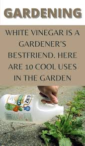 Pin on Gardening for beginners