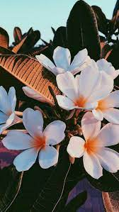 Aesthetic flower wallpaper laptop ...
