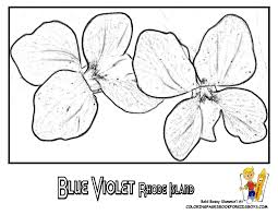 Small Picture Official Rhode Island State Flower Coloring Blue Violet Flower