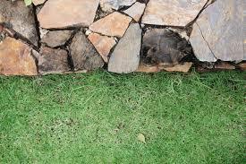 Elemento essencial para a jardinagem, o gramado tem de ser resistente, adequado ao clima e, sobretudo, viçoso. Passo A Passo Como Plantar Grama Nutrijardim