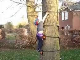 tree into a climbing wall