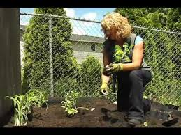 planting veggie starts in a raised bed with cedar grove s vegetable garden soil mix