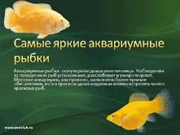 Лучшие презентации для школьников скачать бесплатно скачать  Бесплатно скачать презентацию Самые яркие аквариумные рыбки