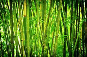 Hasil gambar untuk Bamboo Bath Towels - The Greener Choice
