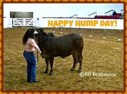 Happy Hump Day Humpin It In The Boonies