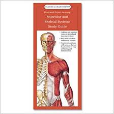 Buy Muscular And Skeletal Systems Study Guide Anatomy And
