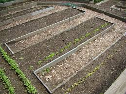 garden soil how to prepare your soil