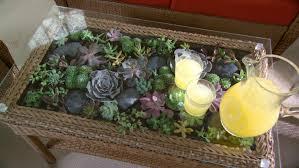 terrarium furniture. terrarium coffee table decorative plant ideas furniture