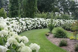 Image result for ​Annabelle hydrangea garden ideas