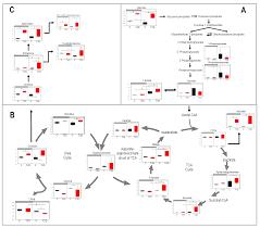 Venn Diagram Type 1 Type 2 Diabetes Nutrients Free Full Text Loss Of Diurnal Oscillatory